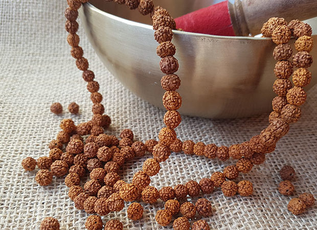Rudraksha, la milenaria semilla