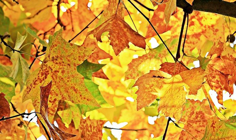 Prepara cuerpo y mente para el otoño - Hojas