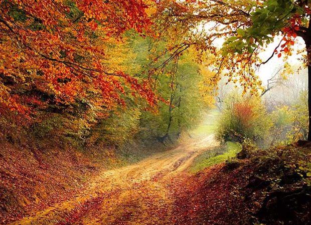 Prepara cuerpo y mente para el otoño - Portada