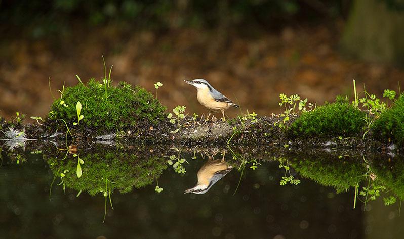 Baños de bosque - Pájaro