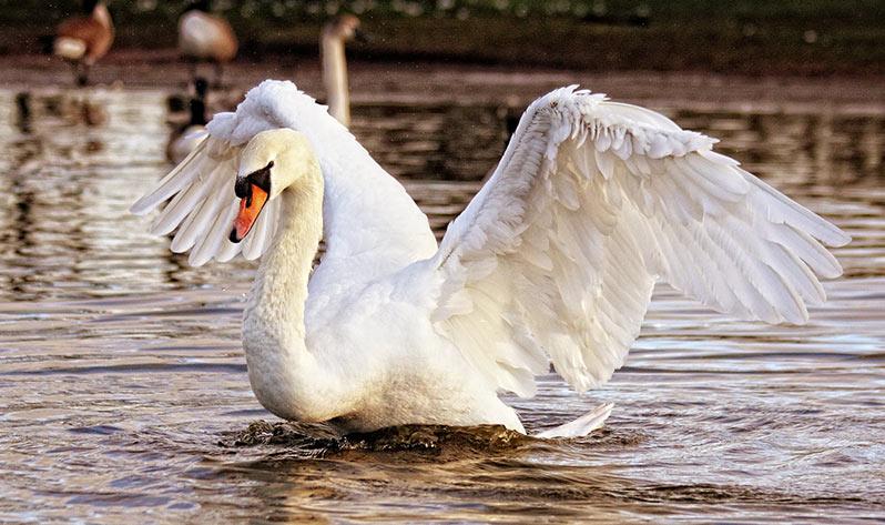 Qué es el yin yoga - Cisne