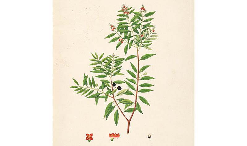 Japa Malas con sándalo - Árbol dibujo