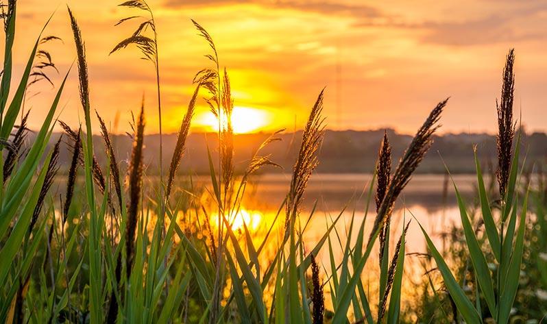 Meditación con Japa Mala para un verano sereno y empoderador - Amanecer